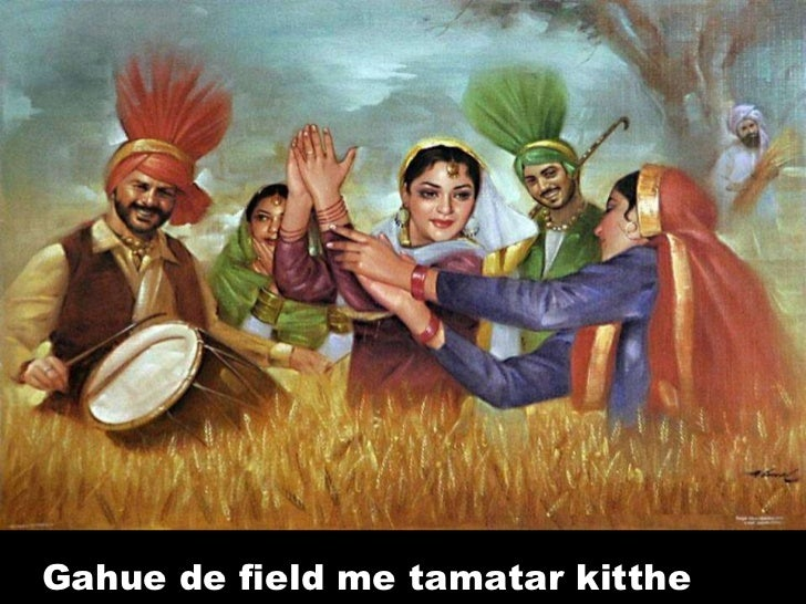 Gahue de field me tamatar kitthe