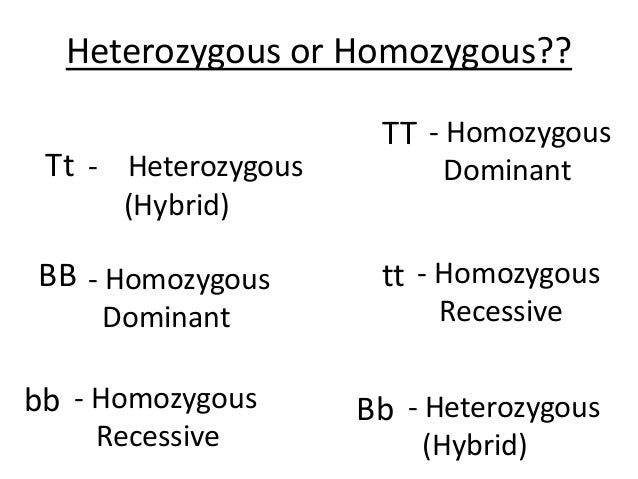 Homozygous Dominant And Homozygous Recessive Pictures to ...