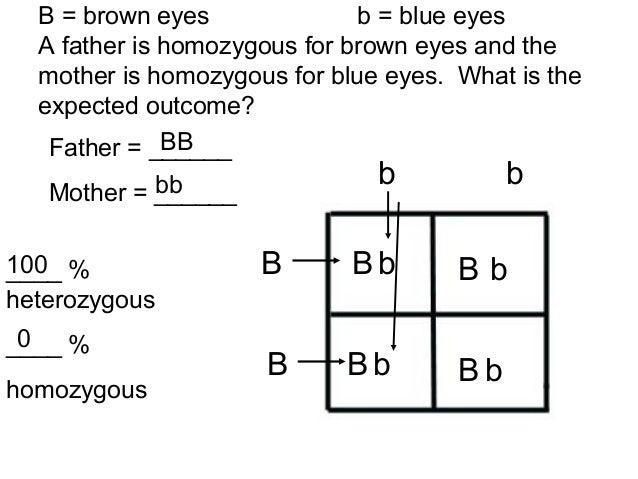 Punnett Square Worksheet 1 Answers 015 - Punnett Square Worksheet 1 Answers