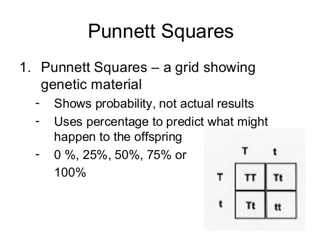 Punnett squares answers 402 – Punnett Square Practice Problems Worksheet