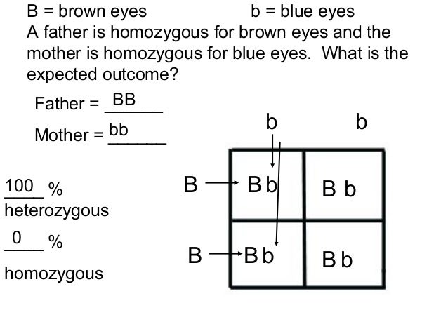 Punnett squares no answers 4.02
