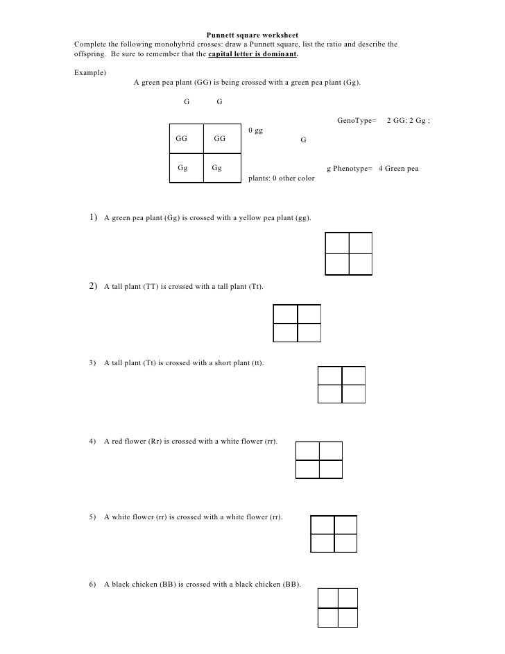 Worksheets Punnett Square Worksheet punnett square worksheet complete the following monohybrid crosses draw a square
