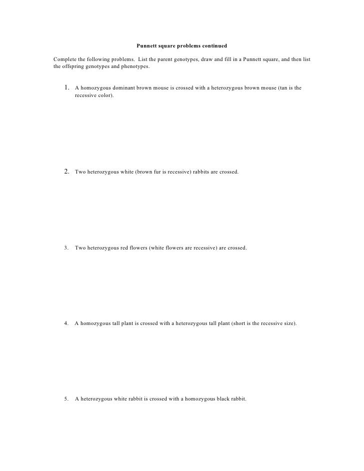 Punnett Square Worksheet – Genotype and Phenotype Worksheet