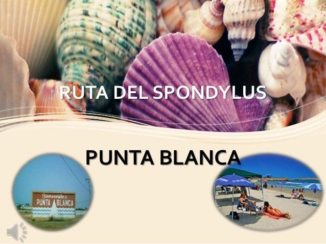 RUTA DEL SPONDYLUS PUNTA BLANCA