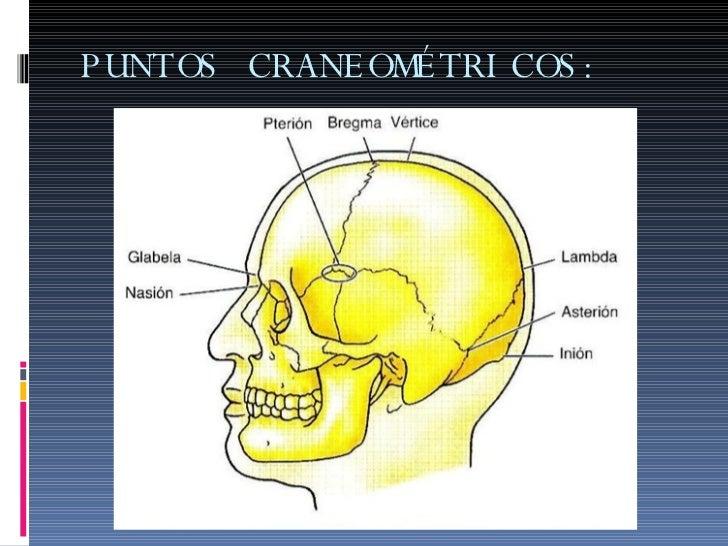 Puntos cefalometricos