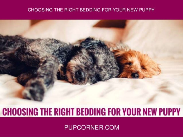 PUPCORNER.COM CHOOSING THE RIGHT BEDDING FOR YOUR NEW PUPPY