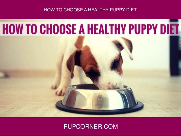 PUPCORNER.COM HOW TO CHOOSE A HEALTHY PUPPY DIET