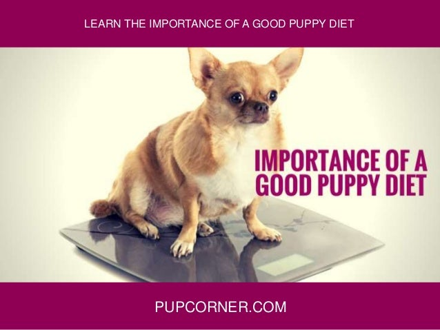 PUPCORNER.COM LEARN THE IMPORTANCE OF A GOOD PUPPY DIET