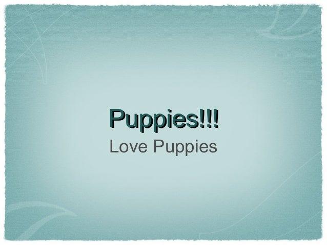 Puppies!!!Puppies!!!Love Puppies