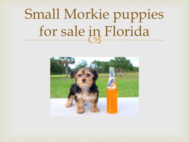 Puppies for adoption in florida