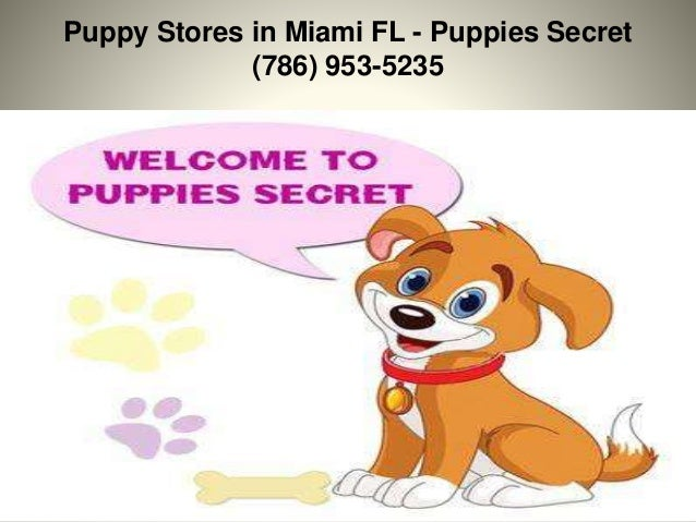 Puppy Stores in Miami FL - Puppies Secret (786) 953-5235