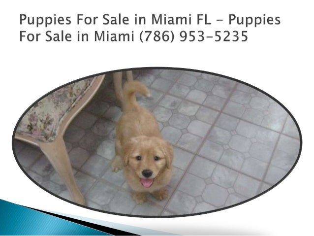 Dogs for Sale in Miami - YouTube