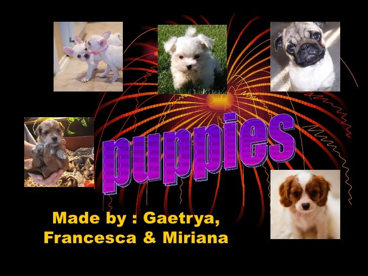 Made by : Gaetrya, Francesca & Miriana puppies