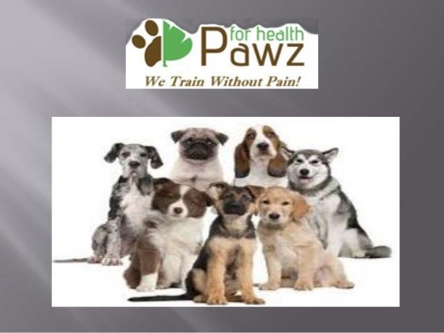Potty Training Puppy Silver Spring MD Slide 3