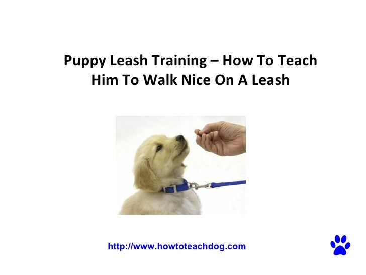 Puppy Leash Training – How To Teach Him To Walk Nice On A Leash http://www.howtoteachdog.com