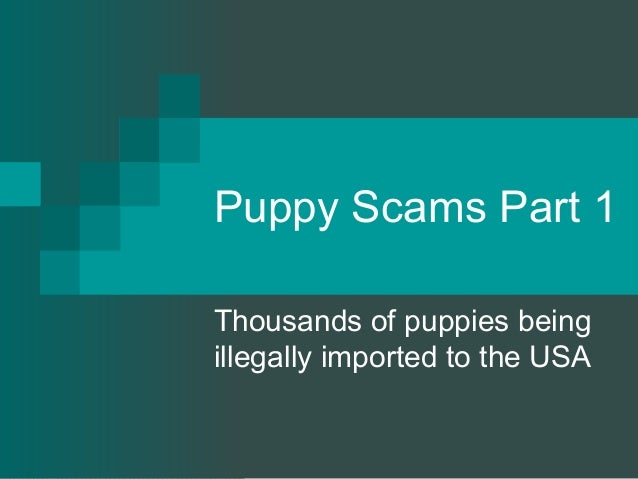 Puppy Scams Part 1Thousands of puppies beingillegally imported to the USA