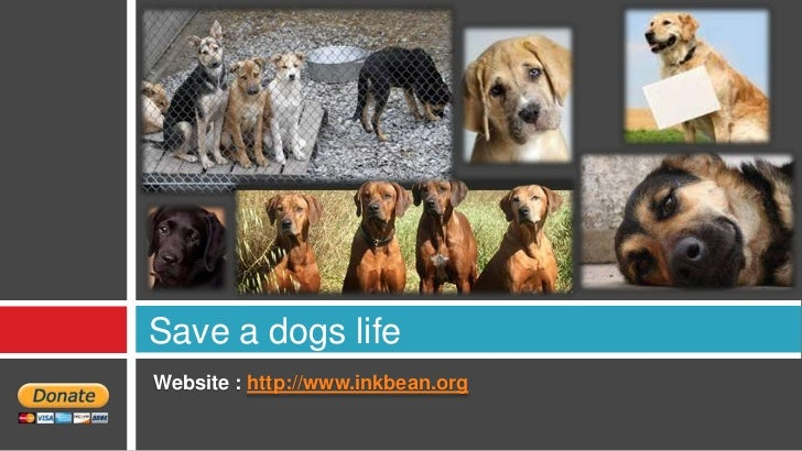 Save a dogs lifeWebsite : http://www.inkbean.org