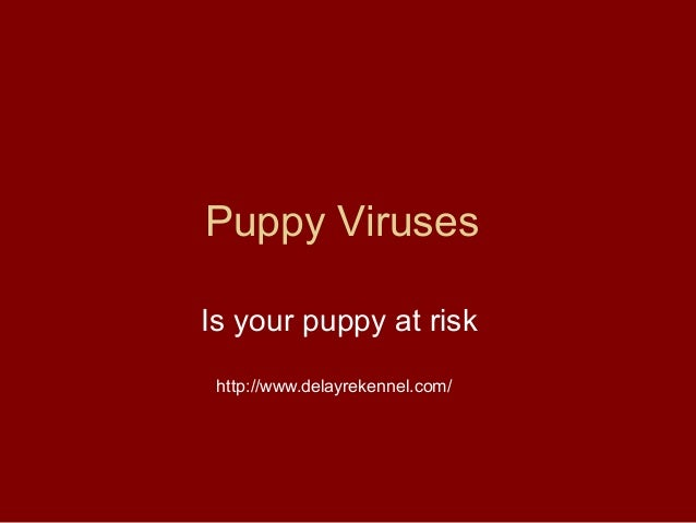 Puppy VirusesIs your puppy at risk http://www.delayrekennel.com/