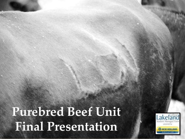 Purebred Beef Unit Final Presentation