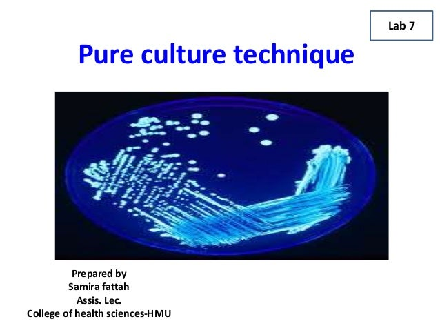 pure cultures lab essay The importance of pure culture pure culture is a microorganisms they are everywhere from the air we breather to the food we digest also within our bodies.