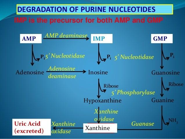 purine amp pyrimidine metabolism and disorders