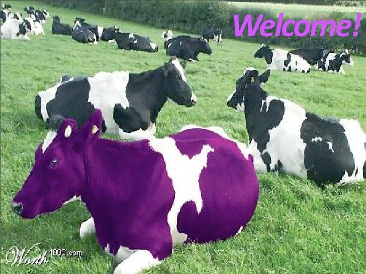 Welcome! Welcome! Purple Cows Unite