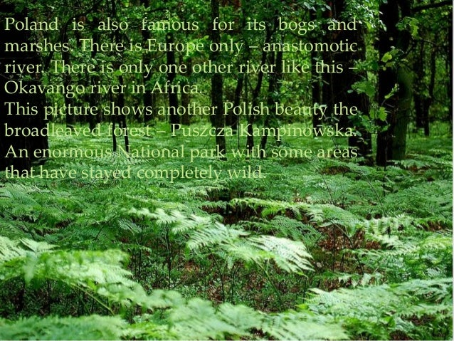 Poland is also famous for its bogs andmarshes. There is Europe only – anastomoticriver. There is only one other river like...