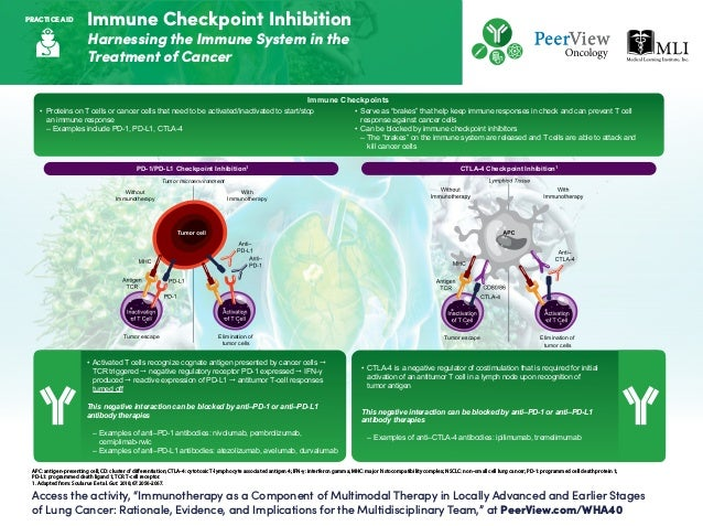 "Immune Checkpoint Inhibition Harnessing the Immune System in the Treatment of Cancer Access the activity, ""Immunotherapy a..."