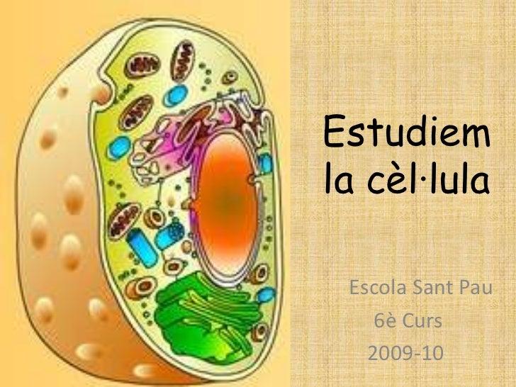 Estudiemla cèl·lula Escola Sant Pau    6è Curs   2009-10