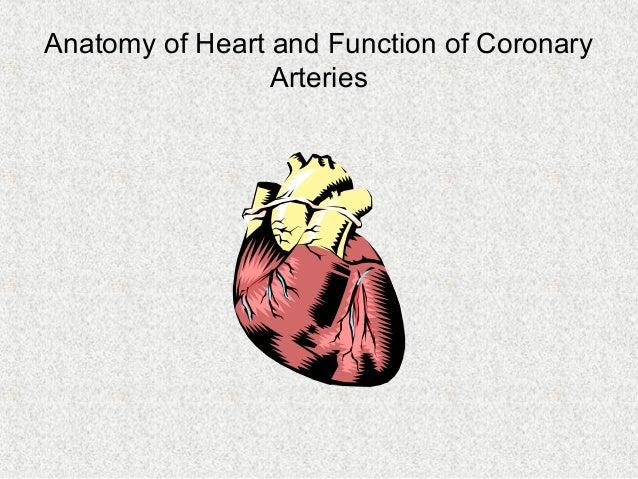 Anatomy of Heart and Function of Coronary Arteries