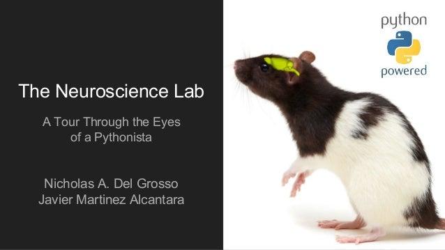 The Neuroscience Lab A Tour Through the Eyes of a Pythonista Nicholas A. Del Grosso Javier Martinez Alcantara