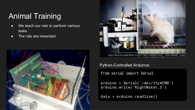 Animal Training ● We teach our rats to perform various tasks. ● The rats are rewarded. from serial import Serial arduino =...
