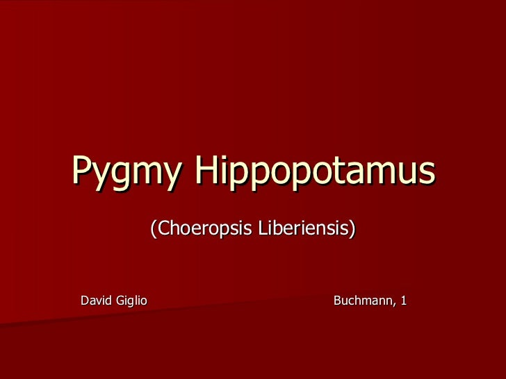 Pygmy Hippopotamus (Choeropsis Liberiensis) David Giglio  Buchmann, 1