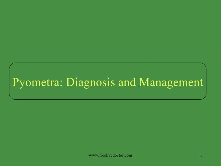www.freelivedoctor.com Pyometra: Diagnosis and Management