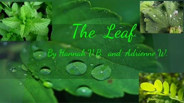 The Leaf By Hannah V.B. and Adrienne W.