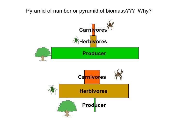 Pyramids of biomass, energy loss
