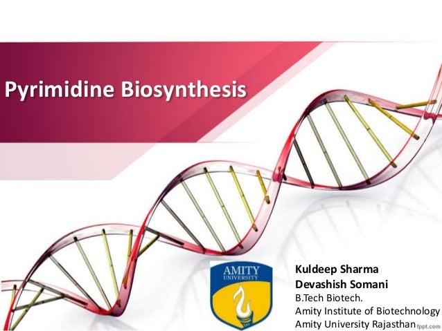 Pyrimidine Biosynthesis Kuldeep Sharma Devashish Somani B.Tech Biotech. Amity Institute of Biotechnology Amity University ...