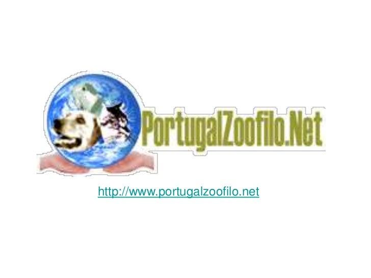 PortugalZoofilo.net - Apresentação