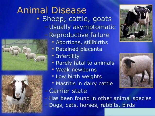 Q Disease Cattle Q fever