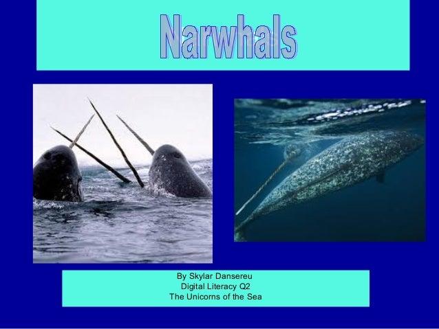 NarwhalsPage 3 5  Page     4    By Skylar Dansereu     Digital Literacy Q2   The Unicorns of the Sea