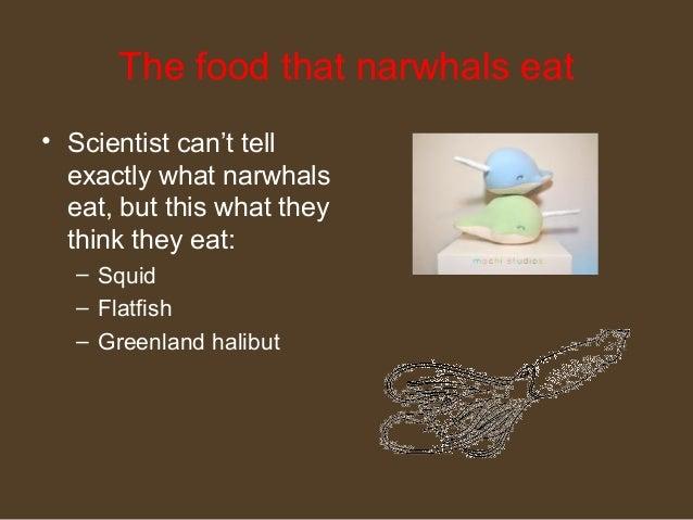 Q2 skylar d.narwhals