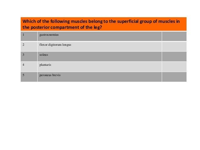 Questions: Posterior Leg Slide 2