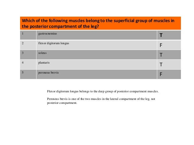 Questions: Posterior Leg Slide 3