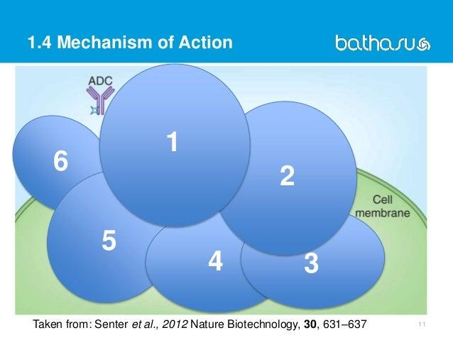 6 5 4 3 1.4 Mechanism of Action 11Taken from: Senter et al., 2012 Nature Biotechnology, 30, 631–637 2 1