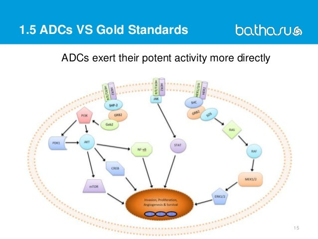 1.5 ADCs VS Gold Standards 15 ADCs exert their potent activity more directly