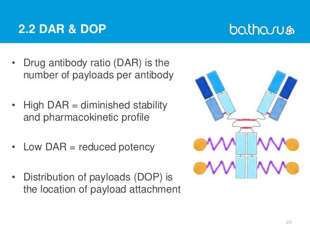 2.2 DAR & DOP • Drug antibody ratio (DAR) is the number of payloads per antibody • High DAR = diminished stability and pha...