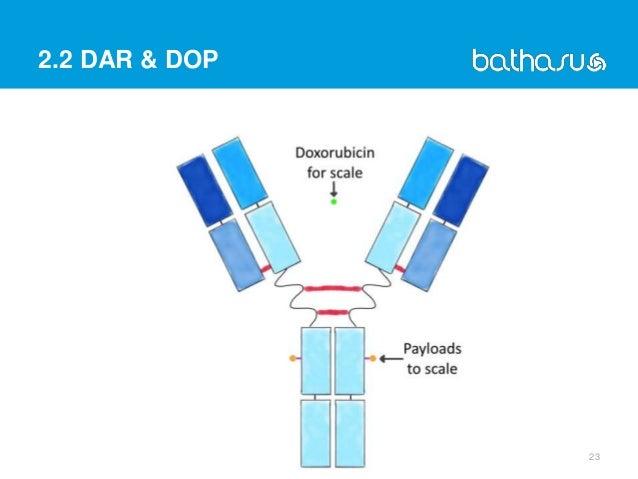 2.2 DAR & DOP 23