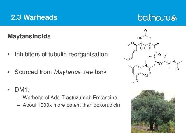 2.3 Warheads Maytansinoids • Inhibitors of tubulin reorganisation • Sourced from Maytenus tree bark • DM1: – Warhead of Ad...