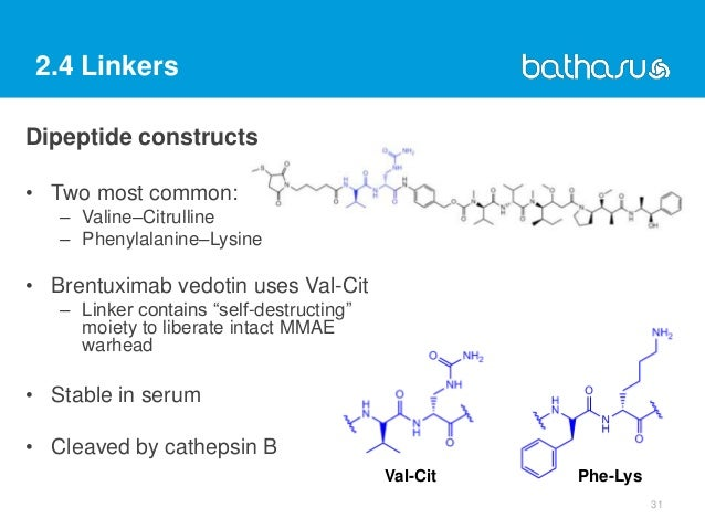 2.4 Linkers Dipeptide constructs 31 • Two most common: – Valine–Citrulline – Phenylalanine–Lysine • Brentuximab vedotin us...