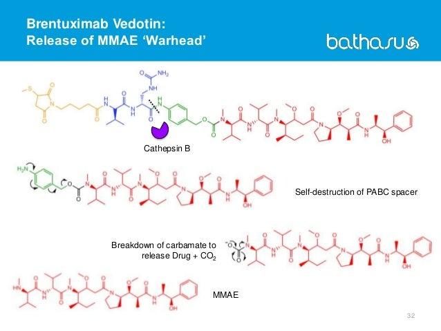 Brentuximab Vedotin: Release of MMAE 'Warhead' 32 Cathepsin B Breakdown of carbamate to release Drug + CO2 MMAE Self-destr...